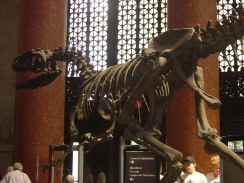 dinosaurio-museo-historia-natural.jpg