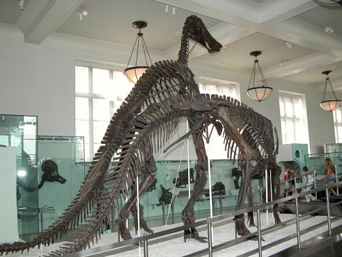 dinosaurios-museo-historia-natural.jpg