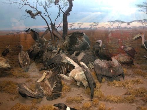 diorama-buitres-museo-historia-natural.jpg