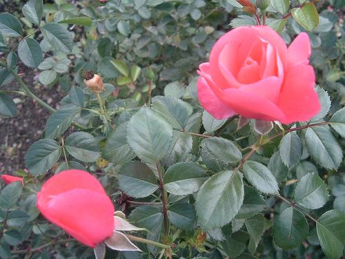 tyler-rosas-texas.jpg